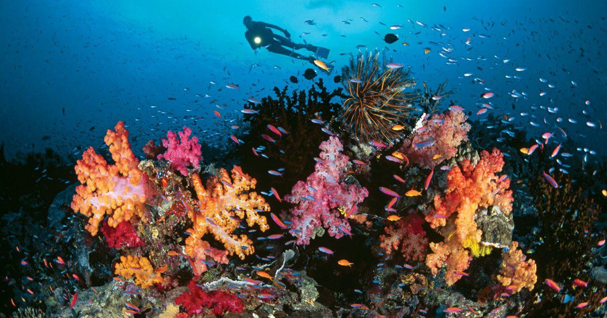 Quá trình sinh trưởng của san hô