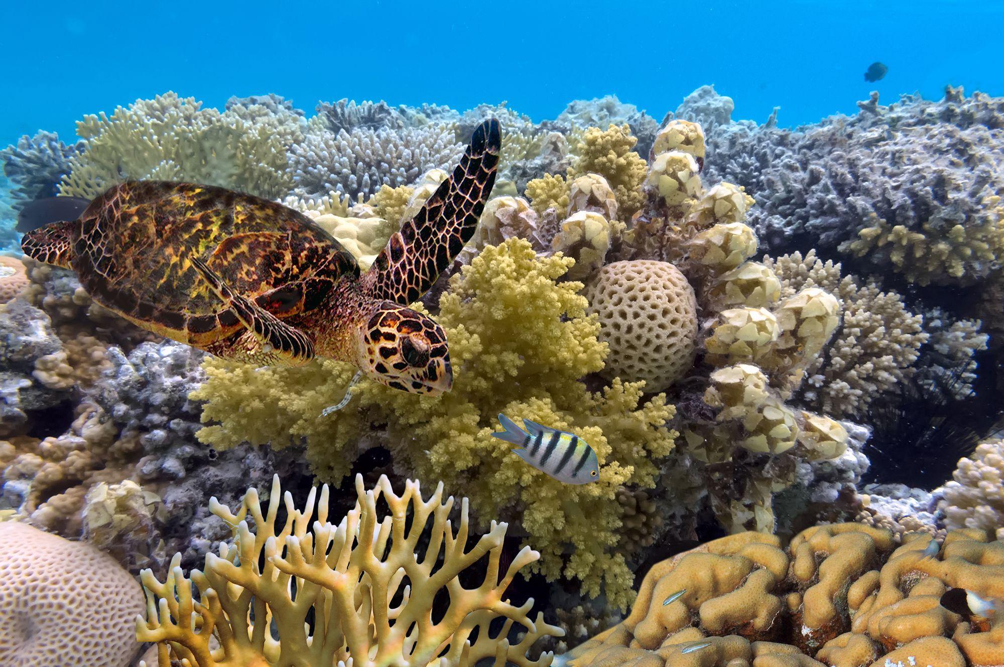 Rạn san hô ở Great Barrier